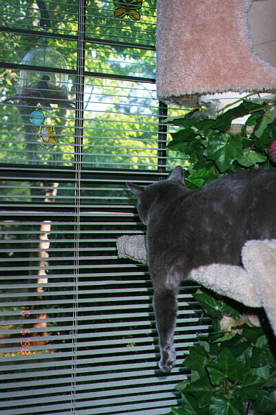 Shhh ... there's a bird out there at the feeder
